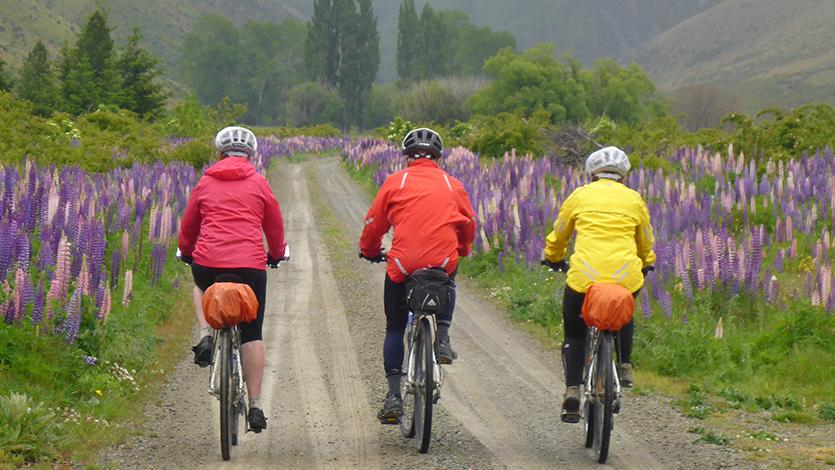 Best ways to explore New Zealand   The Rantau Wanderer