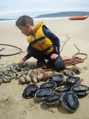NZ Paua (Abalone) being collected at the beach